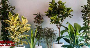 از گل های آپارتمانی در خانه چگونه استفاده کنیم؟ | بلاگ املاک عظیمیان | معماری و طراحی داخلی